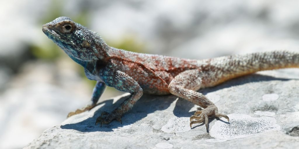Cold-blooded animals