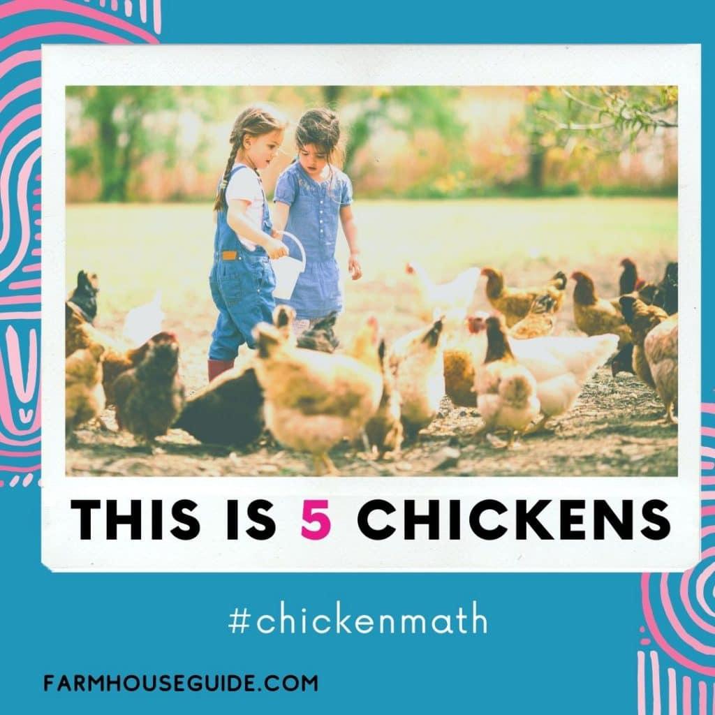 Chicken Math Explained - Pinterest Pin