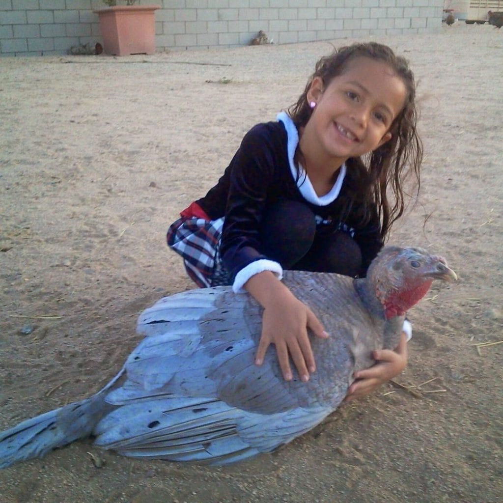 young girl holding a blue turkey that needs a name