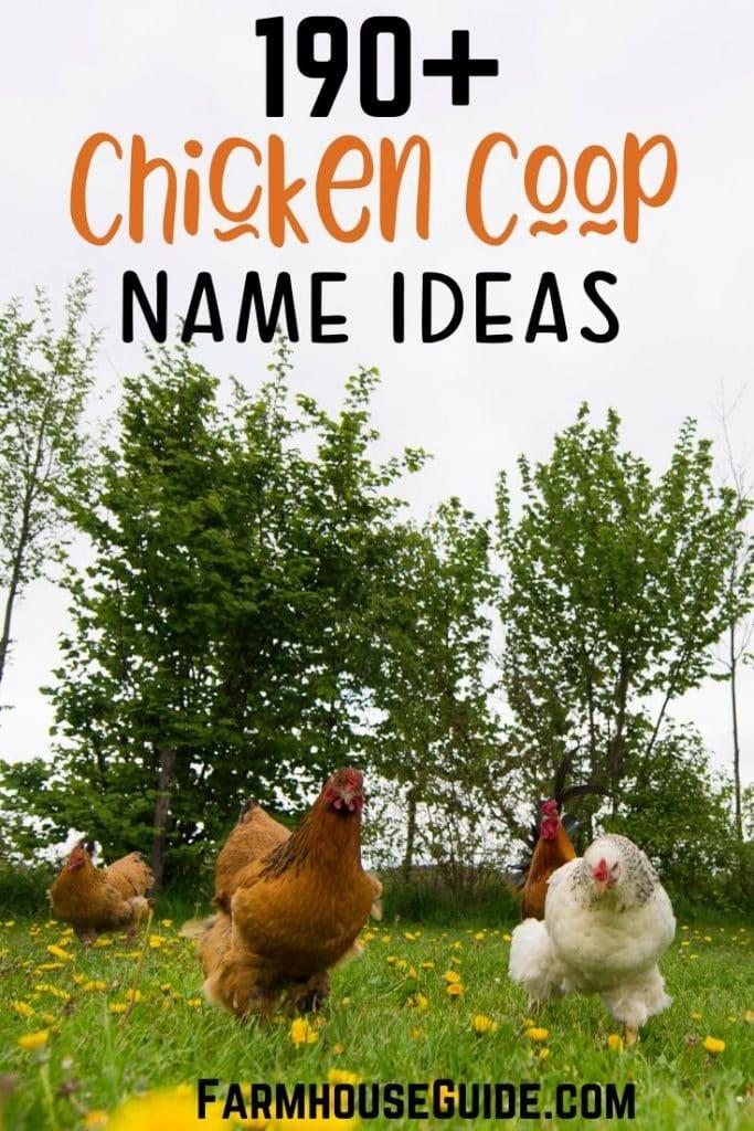 190+ Chicken Coop Name Ideas