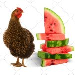 Can Chickens Eat Watermelon? + Watermelon Treat Ideas