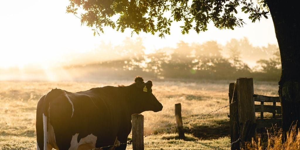 Biblical Farm Name Ideas + Ideas to Create Your Own
