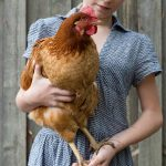 How Much Do Chickens Weigh? - Weight Chart by Breed