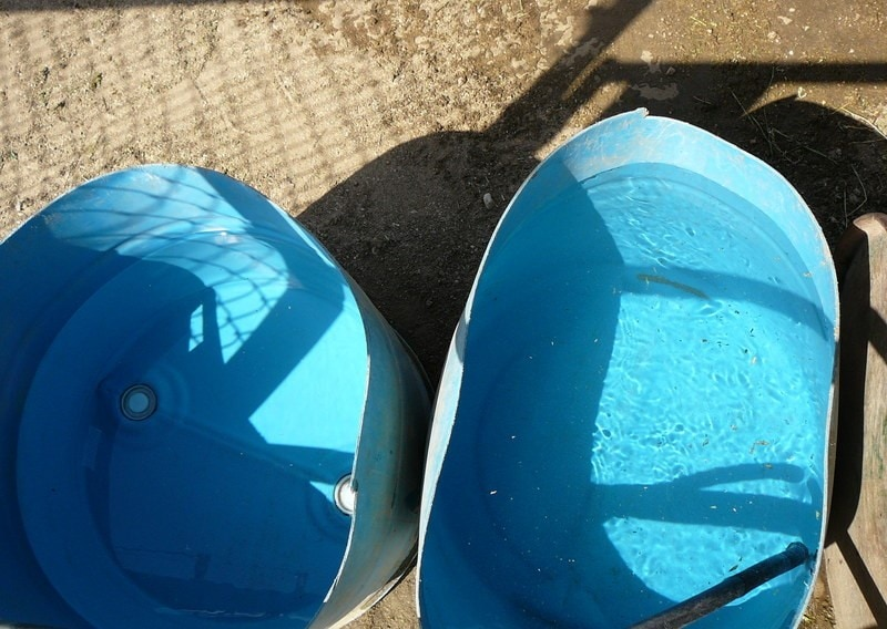Smooth sides on water buckets like these can result in chickens drowning if they accidentally fall in.