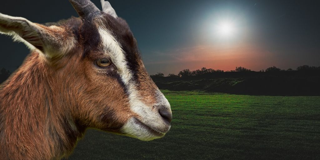 can goats see in the dark