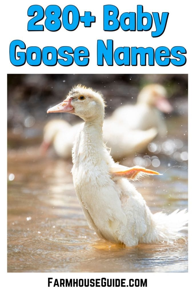 280+ Baby Goose Names, pinterest image