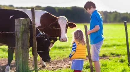 Are Cows Friendly?