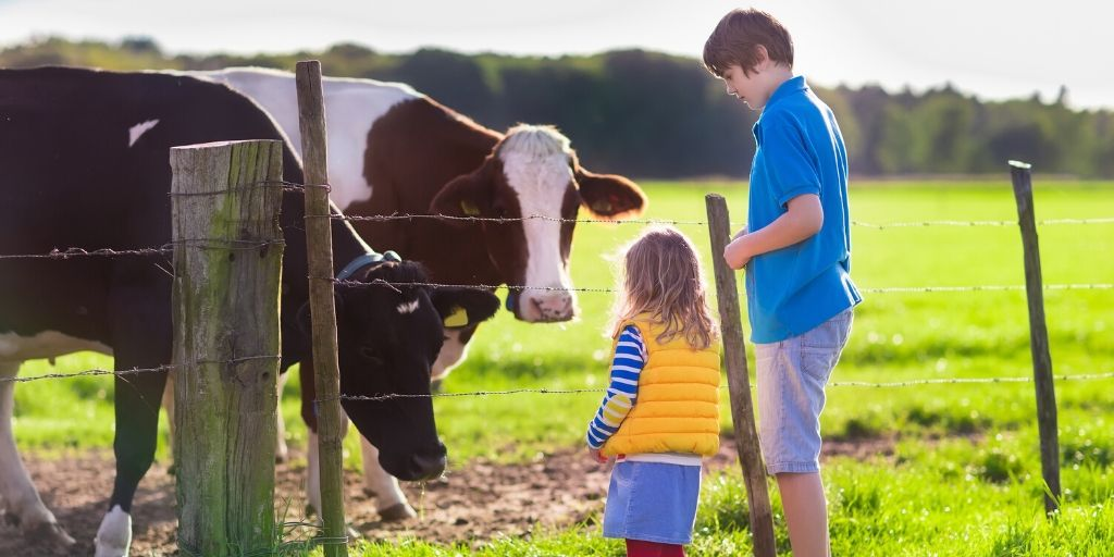 Two kids playing with cows