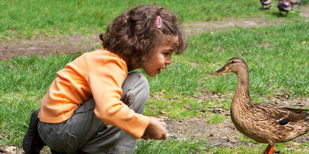 girl feeding a duck