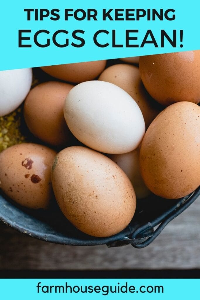 pinterest image, tips for keeping eggs clean