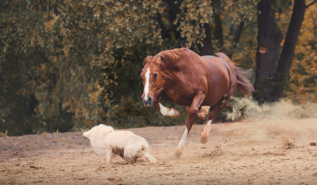 horse attacking a dog