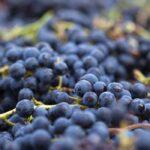 Can Goats Eat Grapes? Advantages & Disadvantages