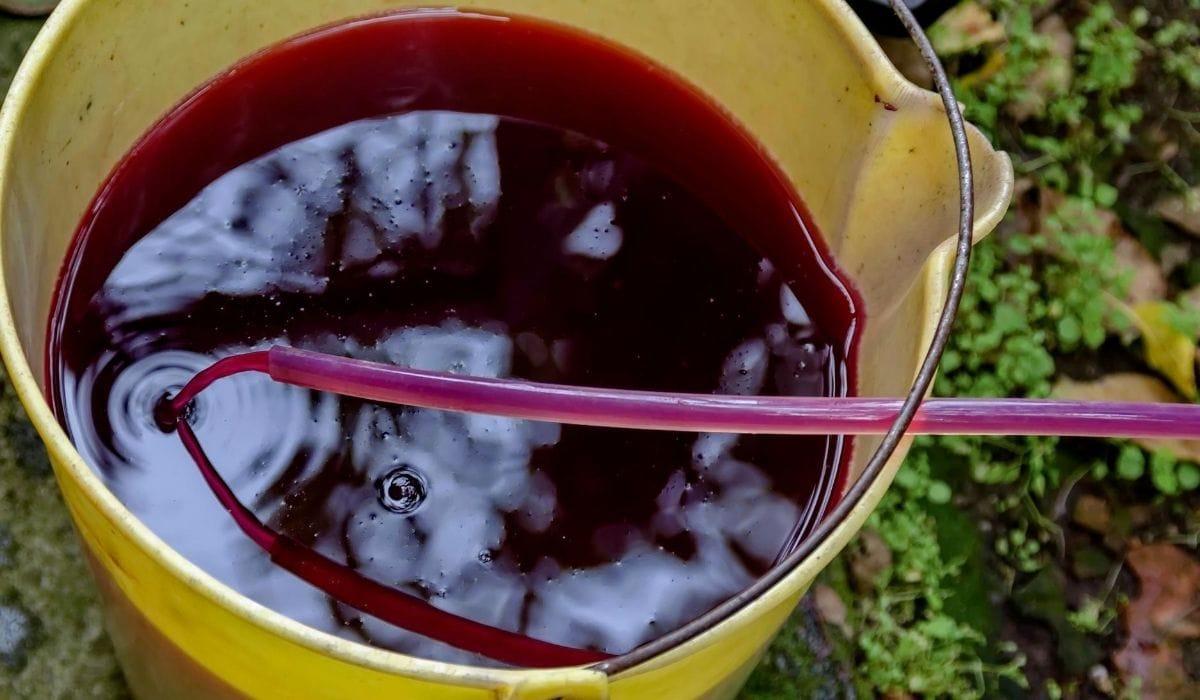 gapes juice