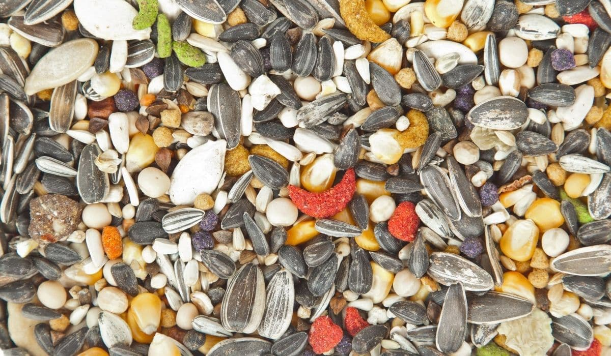mix bird feed for Guinea Fowl