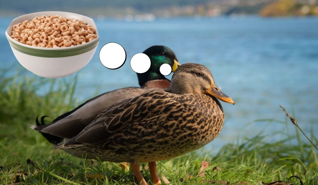 Cheerios and Ducks