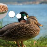Are Cheerios Safe for Ducks?
