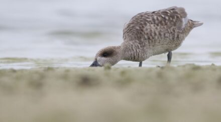 Why Do Ducks Dig Holes (and Should You Worry)