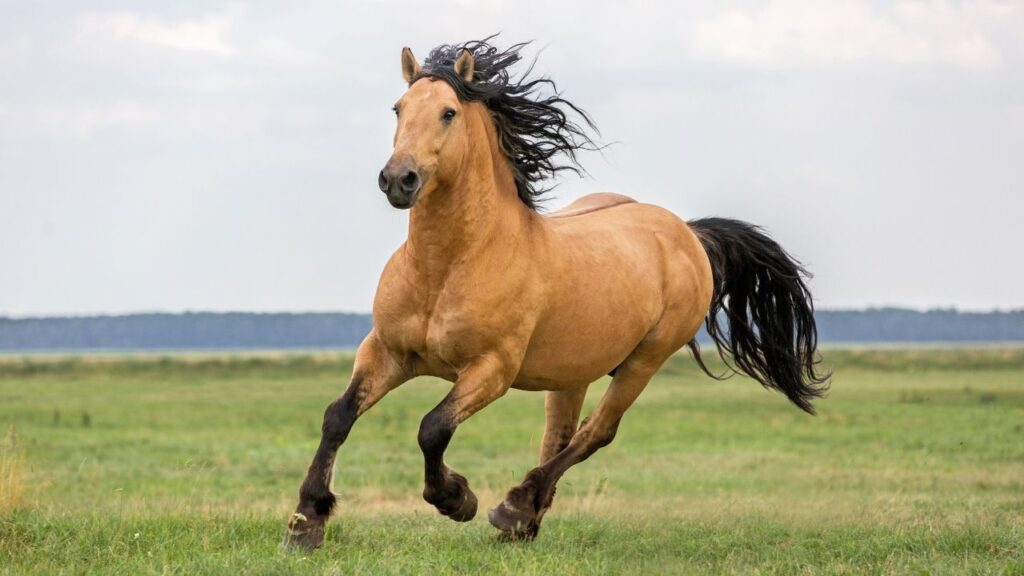 awesome horse names that start with a