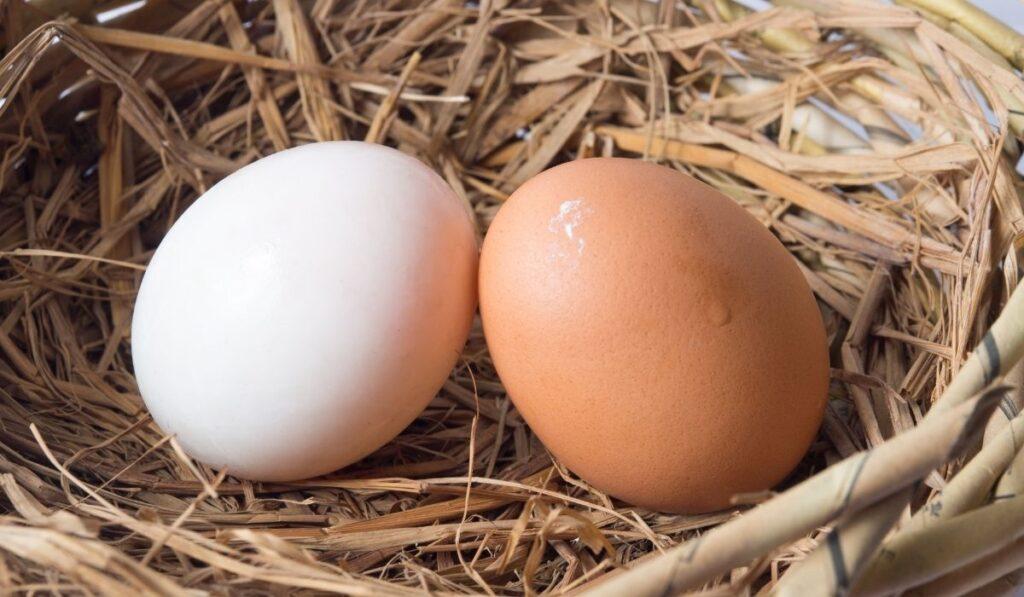 chicken and ducks eggs