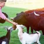 Do Cows Get Along With Goats? What You Need to Know