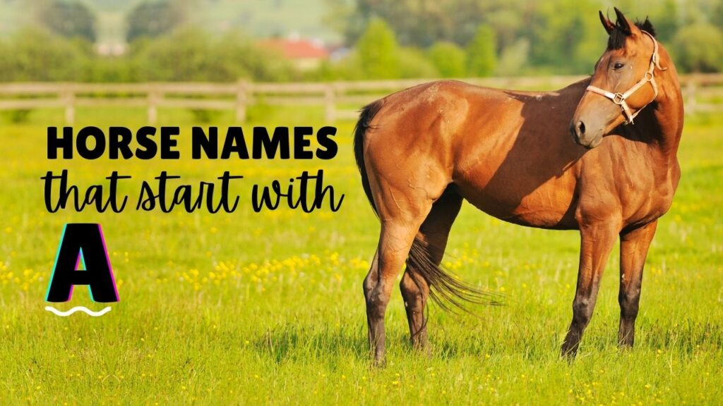 horse names that start with a