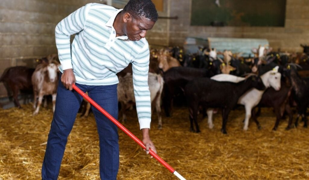 Bedding Amendments to Keep Your Goat Pen Clean