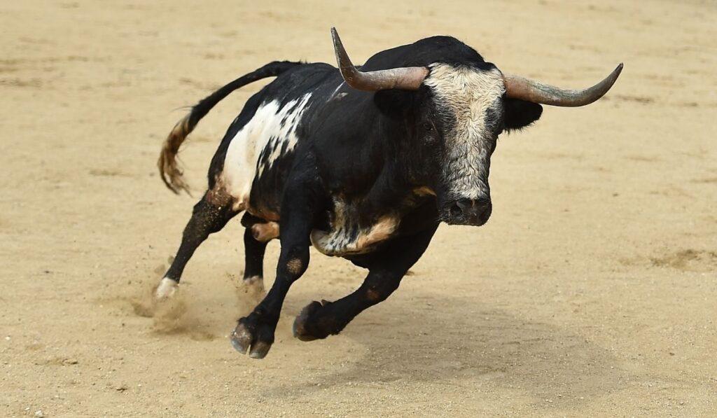Black Bull running