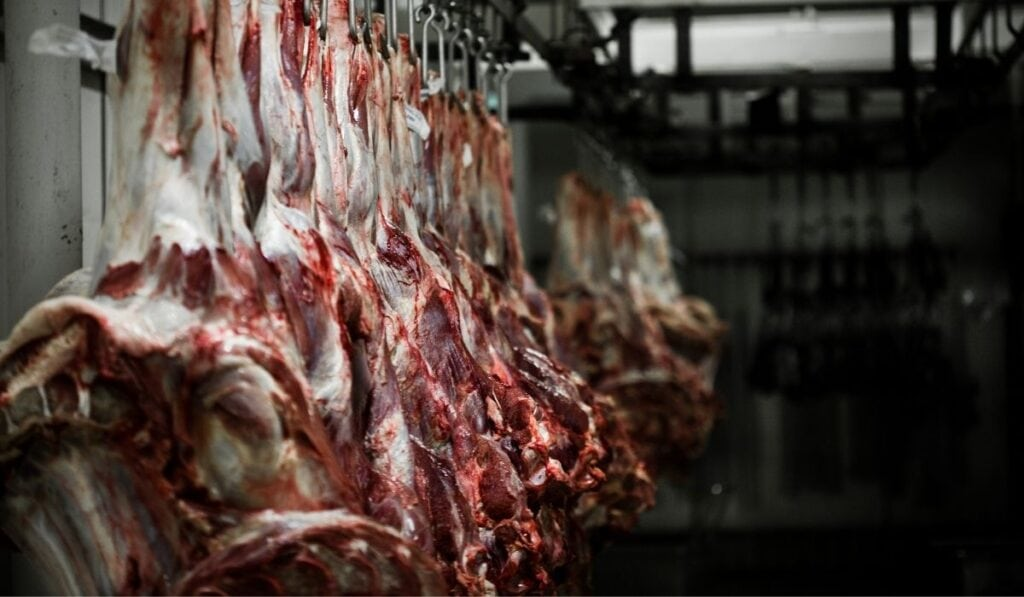 Cows meat