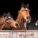 Can Goats and Horses Live Together?