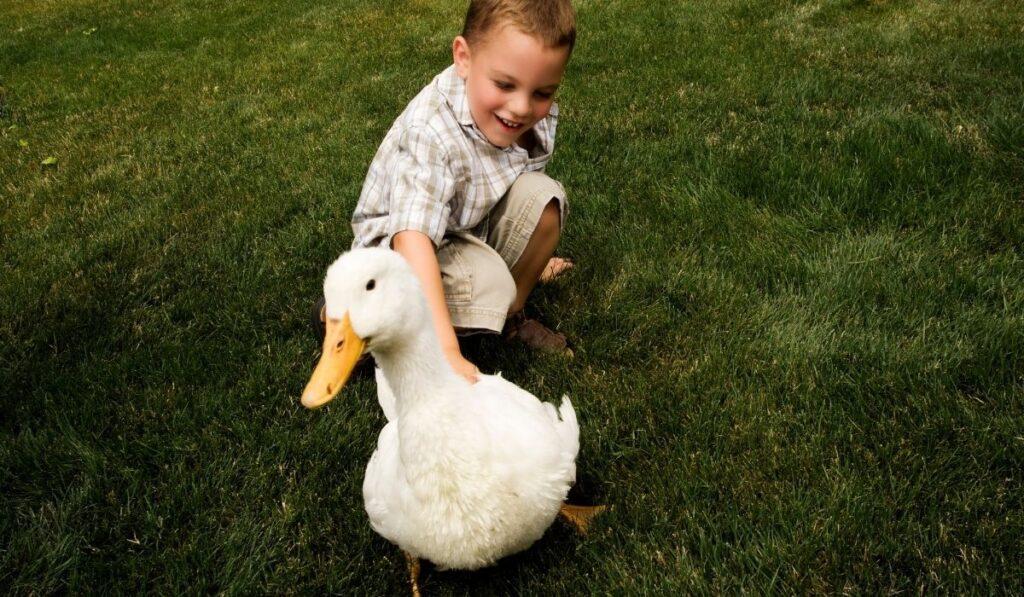 Kid petting white duck