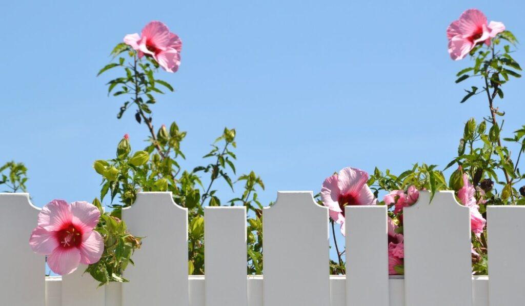 White Fence Protecting Garden