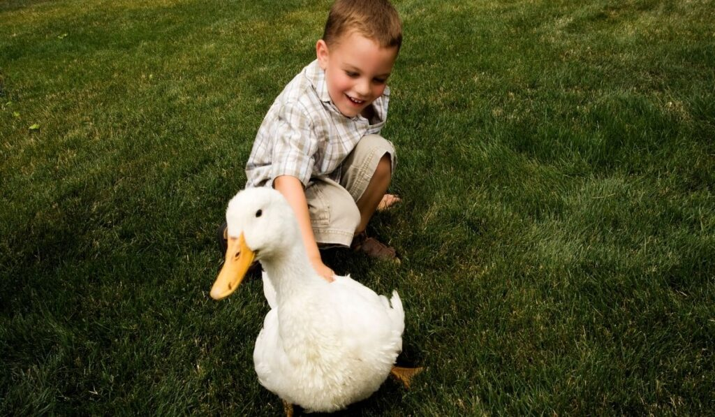 Boy and pet duck