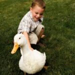 Ducks as Indoor Pets - Tips and Tricks