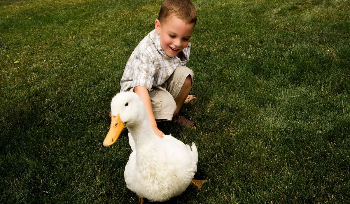 boy petting a duck