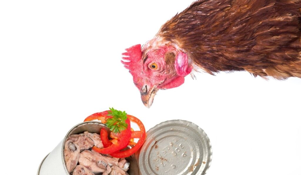 Chicken and canned fish