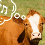 Do Cows Like Music? Here's What We Know