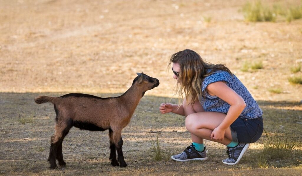 Girl with brown goat