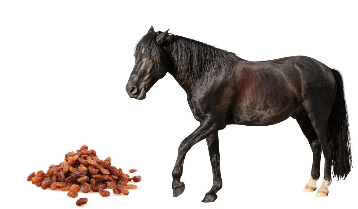 collage of a horse eating raisins