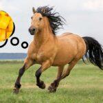 Can Horses Eat Mango?