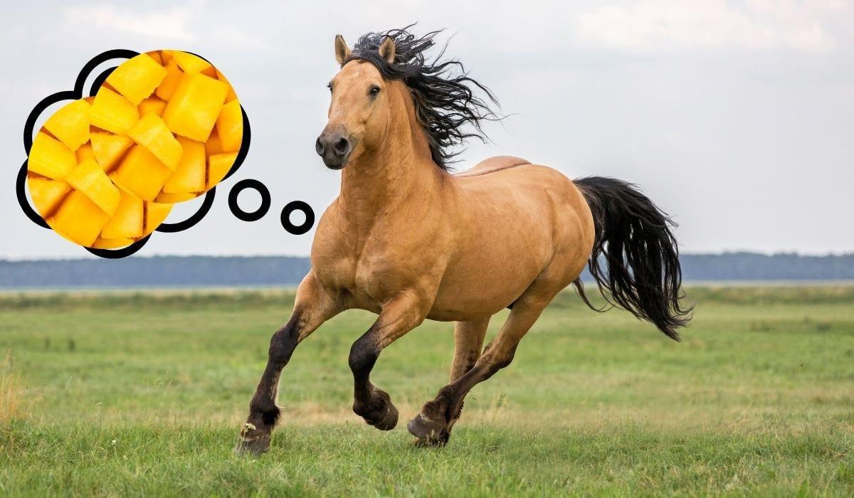 horse thinking about mango