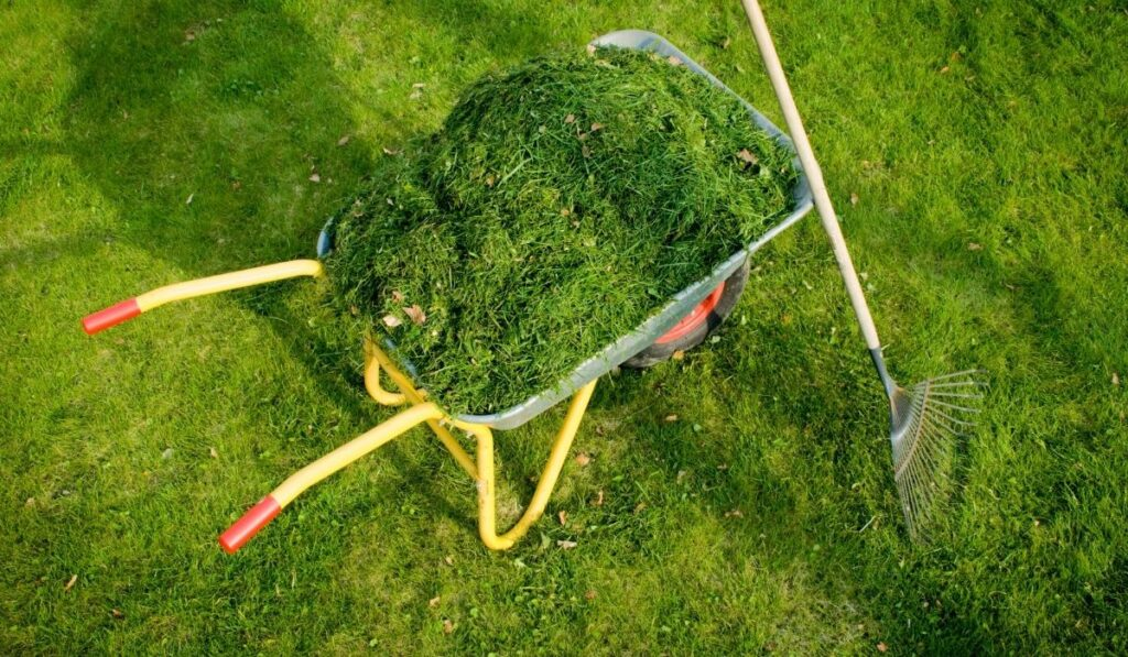 Lawn Clippings After Cutting Grass