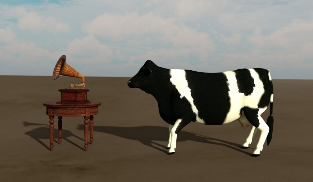 Music player and cow