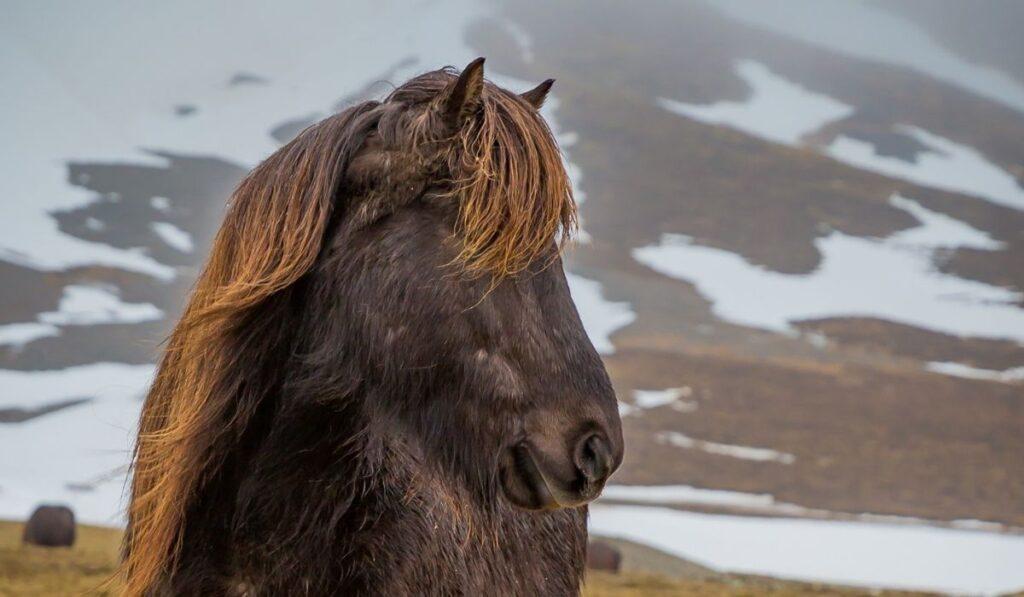 Stocky Horse
