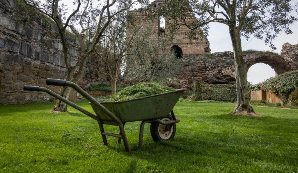 Wheelbarrow of grass clipping