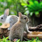 13 Cutest Small Rabbit Breeds