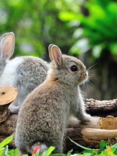 cute small rabbit breeds