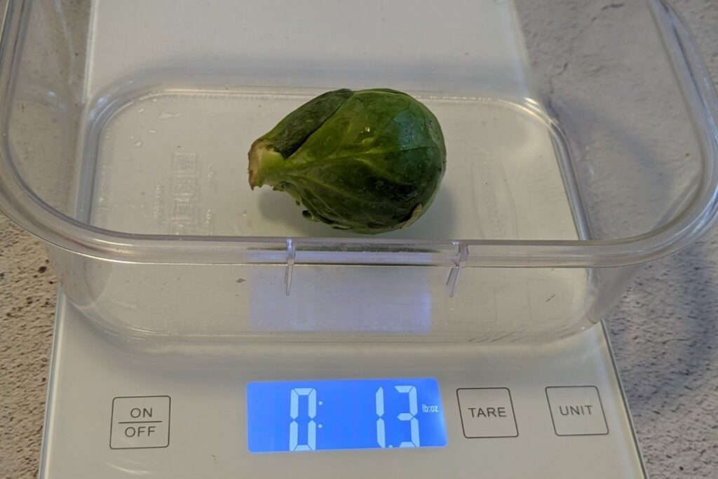 Brussel Sprout weighing 1.3 ounces