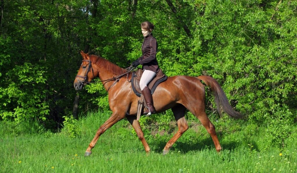 Equestrian English Riding