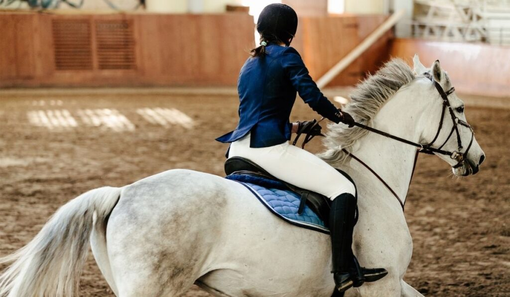 Equestrian Training For Competition