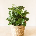7 Beautiful Indoor Plants for Your Farmhouse